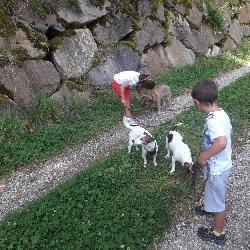 Hundeschule - Die Seilschaft
